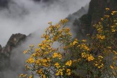 Flor amarela nas montanhas Fotos de Stock Royalty Free