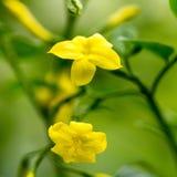 Flor amarela no fundo de plantas borradas dos galhos Fotografia de Stock Royalty Free