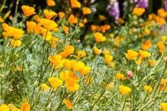 Flor amarela no jardim Fotografia de Stock