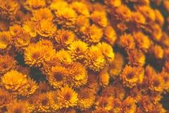 Flor AMARELA para o fundo Fotografia de Stock