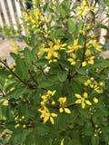 Flor amarela pequena foto de stock
