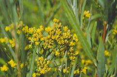 A flor amarela pequena na grama do rio imagens de stock