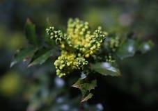 Flor amarela, ramalhete natural, foto macro fotografia de stock royalty free