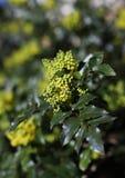Flor amarela, ramalhete natural, foto macro fotos de stock royalty free