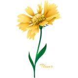 Flor amarela realística do vetor ilustração royalty free