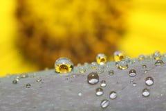 Flor amarela refletida em gotas de água imagens de stock royalty free