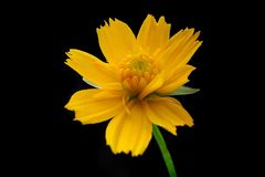 Flor amarilla Foto de archivo