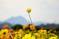 Flor amarilla Fotografía de archivo libre de regalías