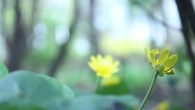 Flor amarilla almacen de metraje de vídeo