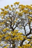 Flor amarilla Fotos de archivo libres de regalías