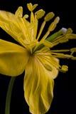 Flor amarilla. Imagen de archivo libre de regalías