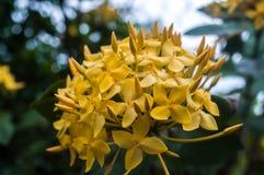 Flor amarilla Imagen de archivo