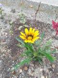 Flor amarilla bastante Imagenes de archivo