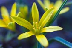 Flor amarilla brillante Imagenes de archivo