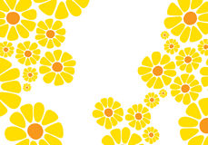 Flor amarilla brillante de la margarita Imagen de archivo libre de regalías
