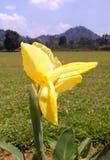 Flor amarilla brillante en jardín Imagen de archivo libre de regalías