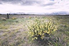 Flor amarilla capturada como el primero plano de esta imagen Imágenes de archivo libres de regalías