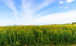 Flor amarilla con el cielo azul y la nube Fotos de archivo