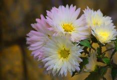 Flor amarilla con el fondo de la falta de definición Fotografía de archivo