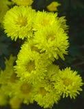 Flor amarilla con el fondo de la falta de definición Foto de archivo