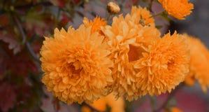 Flor amarilla con el fondo de la falta de definición Foto de archivo libre de regalías