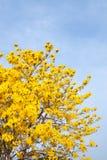 Flor amarilla con el fondo del cielo azul en jardín Fotos de archivo libres de regalías