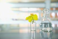 Flor amarilla con el frasco y el frasco de cristal de la ciencia en laboratorio Imagen de archivo libre de regalías