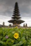 Flor amarilla con el templo de Beratan en el backround Imagen de archivo libre de regalías