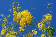 Flor amarilla contra el cielo foto de archivo