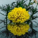 Flor amarilla curvy reflejada imagen de archivo libre de regalías