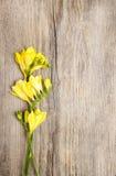 Flor amarilla de la fresia en fondo de madera Fotografía de archivo libre de regalías
