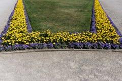 Flor amarilla de la maravilla y césped verde en el parque Imagen de archivo libre de regalías