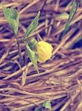 Flor amarilla de la primavera con las hojas verdes Fotografía de archivo