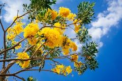 Flor amarilla debajo del cielo azul Fotos de archivo libres de regalías