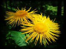 Flor amarilla del bosque Foto de archivo libre de regalías