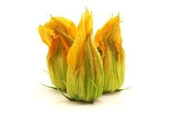 Flor amarilla del calabacín Foto de archivo