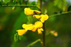 Flor amarilla del color con el fondo de la falta de definición Imagenes de archivo