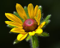Flor amarilla del resorte Fotografía de archivo
