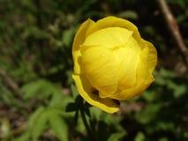 Flor amarilla del verano fotos de archivo