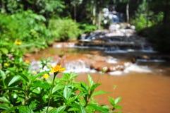Flor amarilla delante de la caída del agua Imagen de archivo