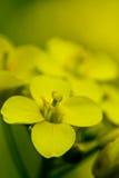 Flor amarilla e hierba verde en jardín Imagen de archivo