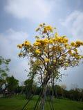 Flor amarilla en cielo azul imagen de archivo