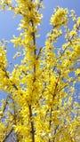 Flor amarilla en el cielo azul Foto de archivo