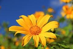 Flor amarilla en el jardín Fotos de archivo