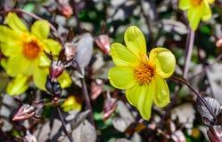 Flor amarilla en el jardín botánico fotos de archivo libres de regalías