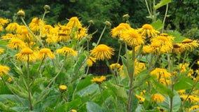 Flor amarilla en el parque fotografía de archivo