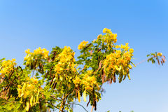 Flor amarilla en foco selectivo del árbol Fotografía de archivo libre de regalías