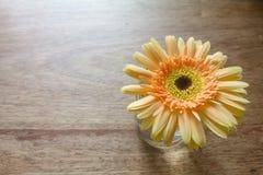 Flor amarilla en fondo de madera de la tabla Imagen de archivo libre de regalías