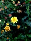 Flor amarilla en fondo negro fotos de archivo libres de regalías