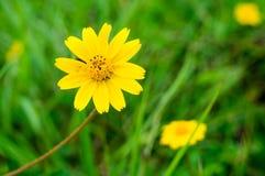 Flor amarilla en jardín Foto de archivo
